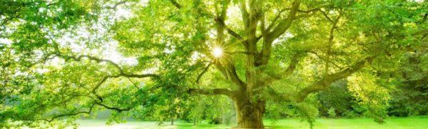 bg-arbre-energie-chinoise-rochelle-vanessa